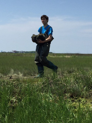 Jonathan Monkemeyer restoring living shoreline at Sea Isle NJ with NJ DEP